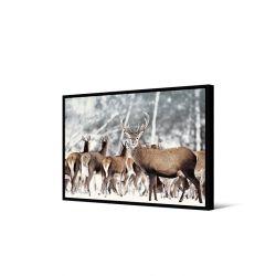 Toile encadré Groupe de cerfs, format paysage 50 x 70 cm, collection My gallery, Pôdevache