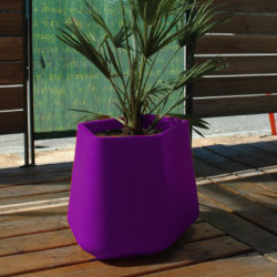 Pot Rock Garden Medium, Qui est Paul ? violet