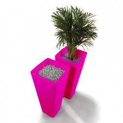 Pot All So Quiet, Qui est Paul? fuchsia